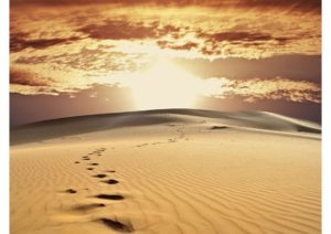 40 Thứ Có Thể Từ Bỏ Để Sống Mùa Chay Và Suốt Cả Đời